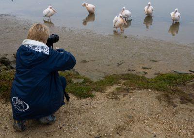 Bird Photography West Coast South Africa