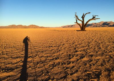 Dead Tree Namibia