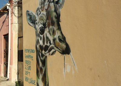 Giraffe Wall Art in Woodstock Cape Town