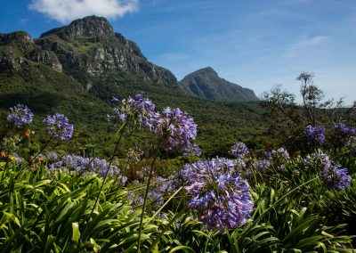 Photo Tour Kirstenbosch