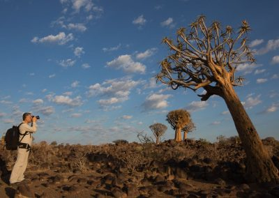 Quivertree Forest Keetmanshoop