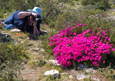 West Coast Spring Flower Tours