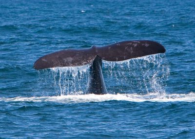Whale Viewing Tour Cape Town