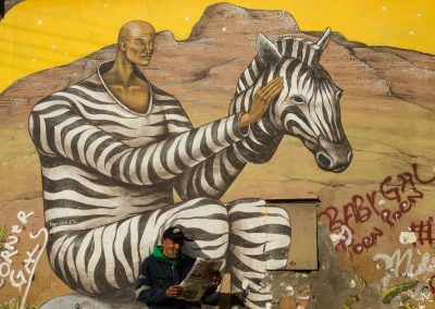 Zebra Wall Art in Woodstock Cape Town